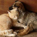 犬猫動物ペットを飼う協力者(家族・友人)の存在&最期を看取る覚悟は必要【口コミ・感想体験談】