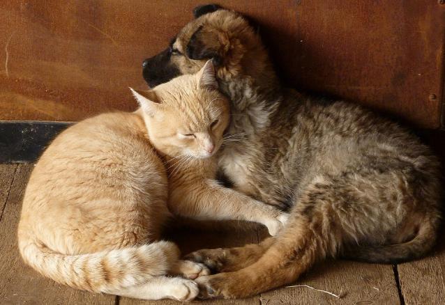 犬や猫を飼うときに考えなければならないことは
