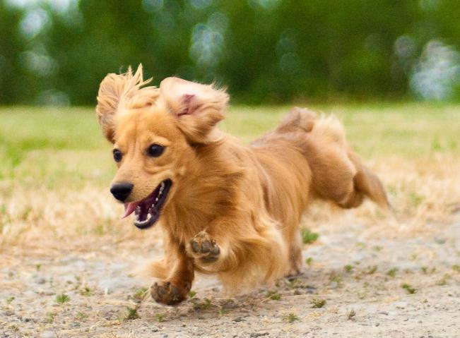初めての犬の保険でびっくり