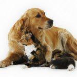 犬や猫(ペット)を飼うなら経済状況は重要『生涯死ぬまでにかかるお金費用はどれくらい?』