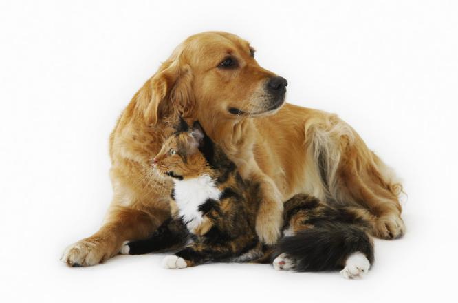 犬猫の生涯にかかるお金費用