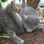 雑種・混血・ミックス猫は丈夫&飼いやすい?毛色による性格や特徴の違いとは?【口コミ/感想/体験談】