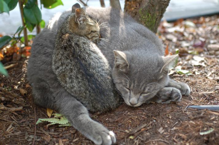 雑種の猫の性格や特徴ってどんなの?