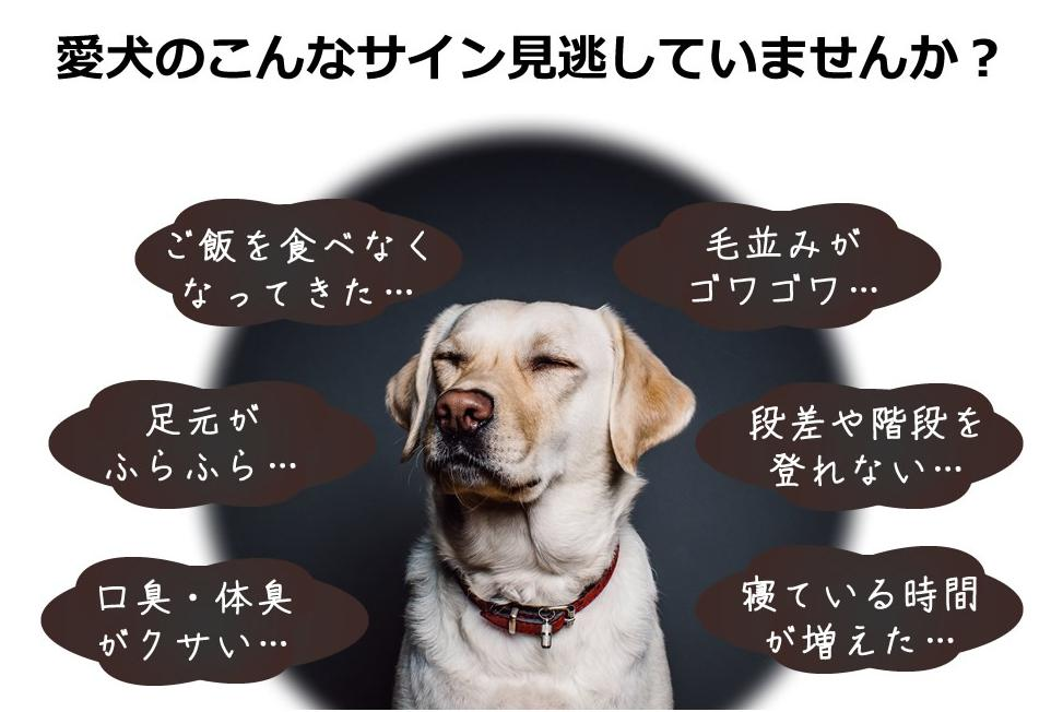 ドクターケアワン-Dr.carewan- おすすめな愛犬