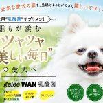 """ジュレワン乳酸菌-geleeWAN-口コミ・効果『愛犬サプリメント""""CheriWAN(シェリーワン)"""""""