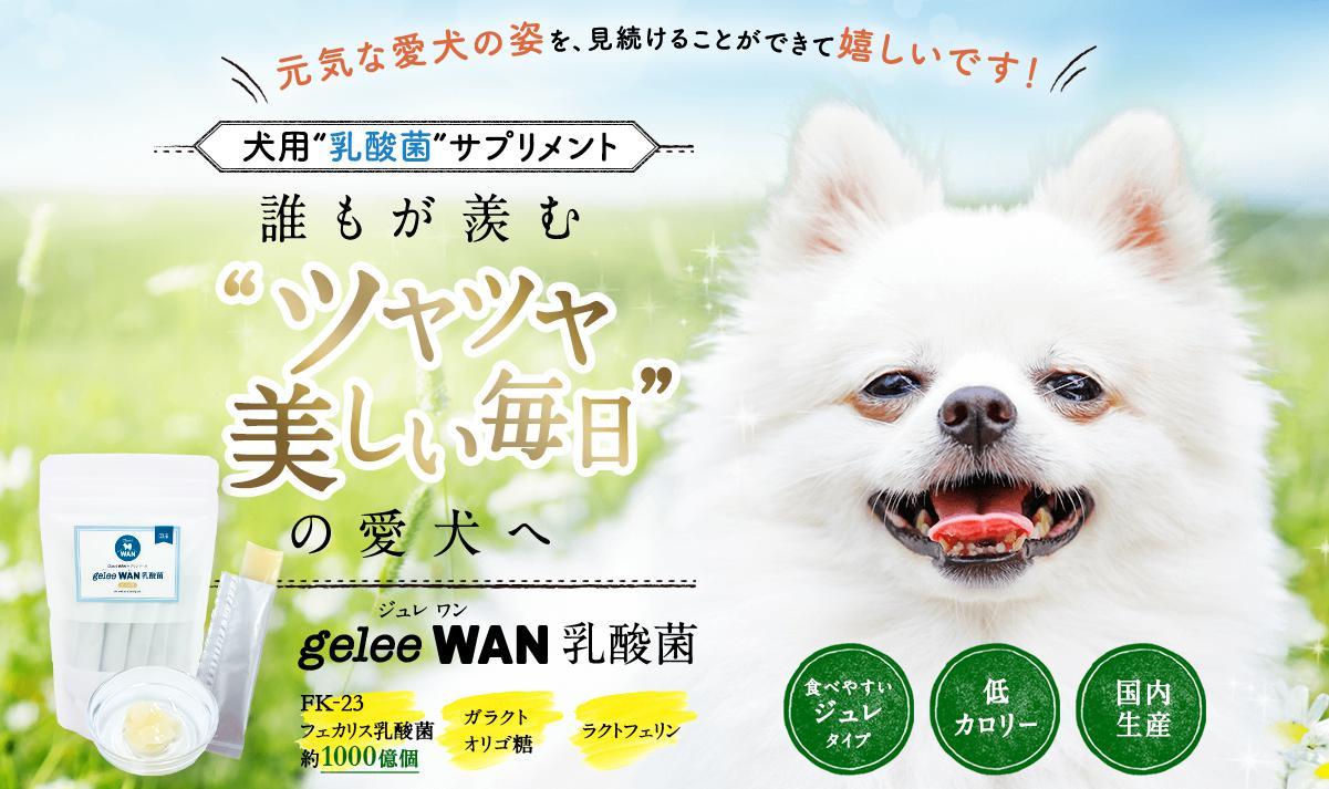 ジュレワン乳酸菌-geleeWAN- 公式サイトへ