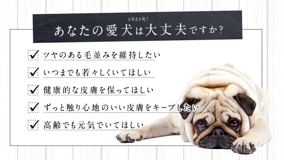 ジュレワン乳酸菌-geleeWAN- おすすめな愛犬