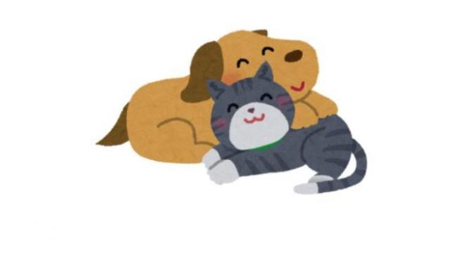 愛犬と愛猫のご飯おすすめランキング