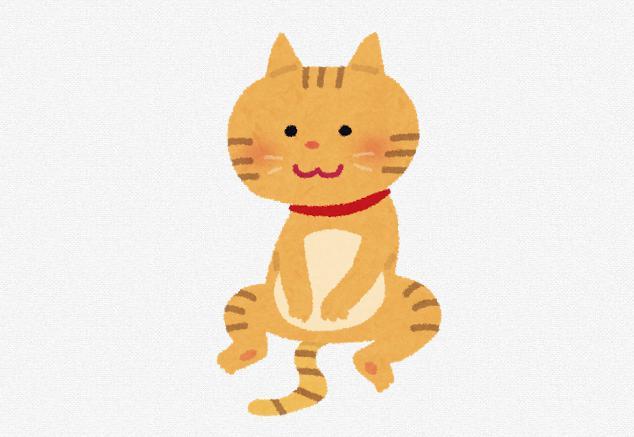 猫用サプリメントおすすめランキング!口コミ・効果!とは