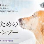 """ミネラルスパシャンプー口コミ・効果!安心安全犬用シャンプー""""レティシアン""""!"""